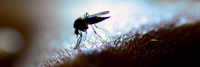12 Interesting (and Disgusting) Facts About Mosquitoes