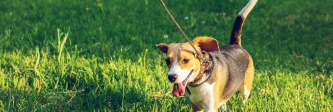 3 Signs You Need Flea Treatment Now
