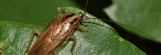 Palmetto Bugs and Roaches: Fact vs. Fiction