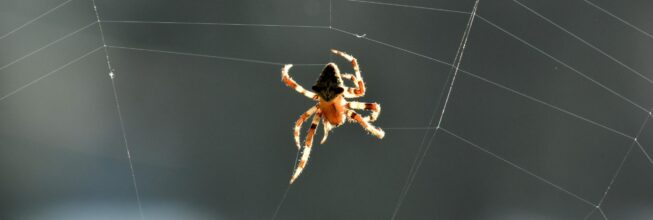 Spiders to Watch Out For in Southern Georgia and Northern Florida