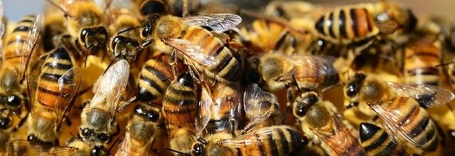 A Guide To Local Bees (And Whether They Sting)
