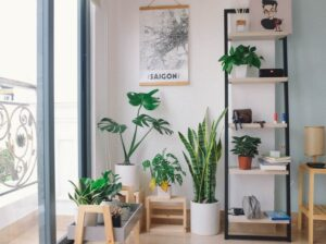 Keep houseplants out of your plants.