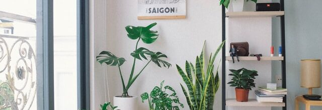 How to Avoid Bugs in Your Houseplants