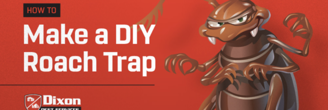 How to Build a Homemade 2-Liter Roach Trap
