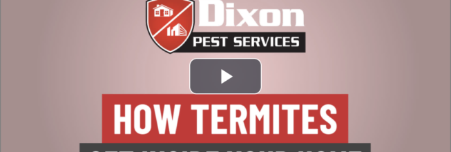 VIDEO: How Termites Get Into Your Home