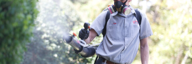 What To Expect From Pest Control Treatment